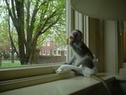 милые обезьяны Доступные